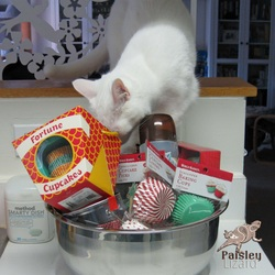 Picture of cat and baking supplies