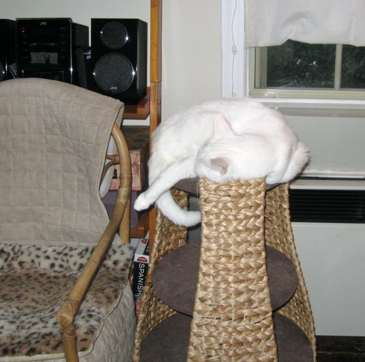 cat napping on perch