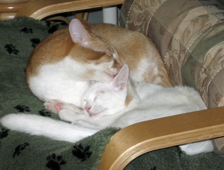 Picture of two cats in a chair