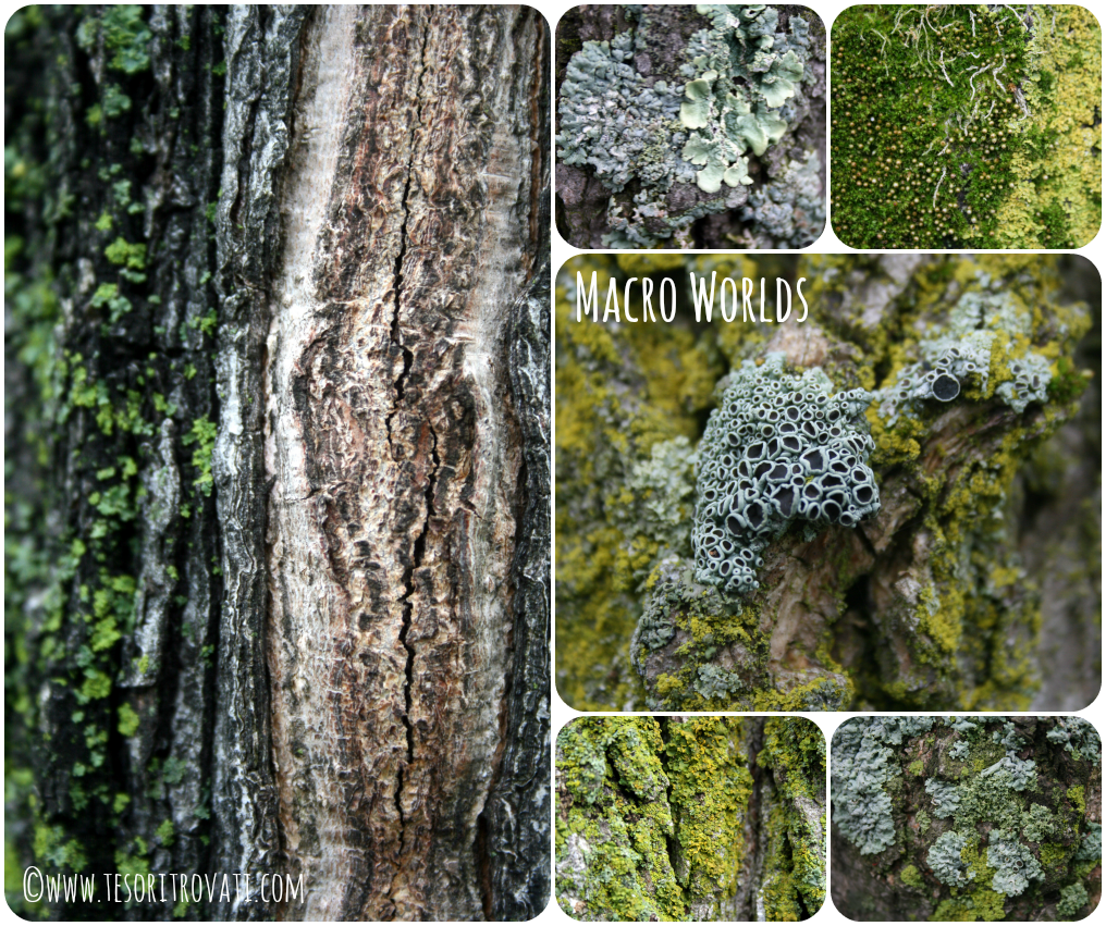 Collage of lichen and moss on tree bark