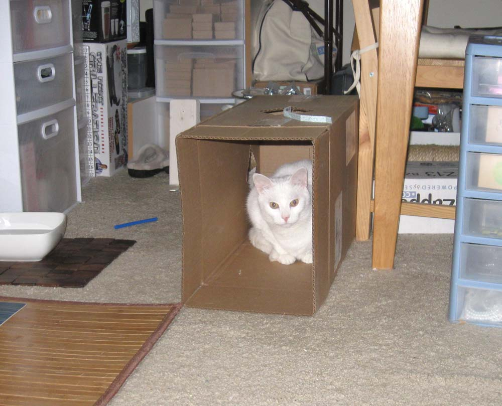 White cat in cardboard box
