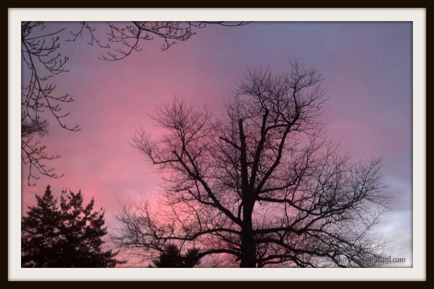 Winter tree silhouette by sunset